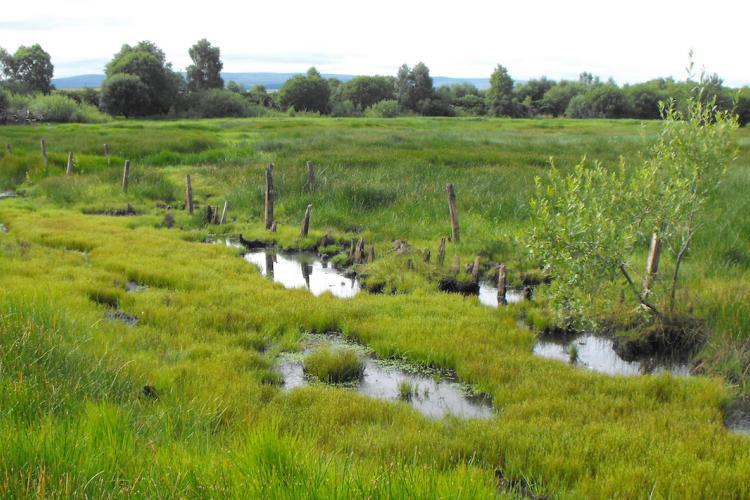 Hafren Water: Surface water management